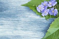 Hölzerner Hintergrund mit blauen Blumen Lizenzfreie Stockbilder
