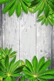 Hölzerner Hintergrund mit grünen exotischen Blättern Stockfotografie