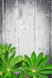 Hölzerner Hintergrund mit grünen exotischen Blättern Lizenzfreie Stockfotografie