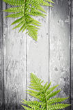 Hölzerner Hintergrund mit grünen exotischen Blättern Lizenzfreies Stockbild