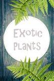Hölzerner Hintergrund mit grünen exotischen Blättern Stockfoto