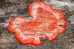 Hölzerner Hintergrund mit Mehltau Lizenzfreies Stockbild