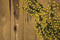 Hölzerner Hintergrund mit Mimose Lizenzfreies Stockbild