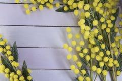 Hölzerner Hintergrund mit Mimose Stockbilder