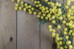 Hölzerner Hintergrund mit Mimose Lizenzfreies Stockfoto