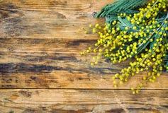 Hölzerner Hintergrund mit Niederlassungen der Mimose Stockfotografie