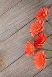 Hölzerner Hintergrund mit orange Gerberablumen Stockbild