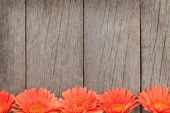 Hölzerner Hintergrund mit orange Gerberablumen Lizenzfreies Stockfoto