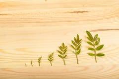 Hölzerner Hintergrund mit vereinbarten grünen Blättern Stockfotografie