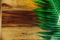 Hölzerner Hintergrund und grüner Farn verlässt mit Sonnenschein stockfotografie