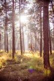 Hölzerner Jagdstand in einem Wald mit Morgensonne Stockbilder