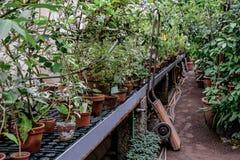 Hölzerner Karren am tropischen botanischen Garten Lizenzfreie Stockbilder