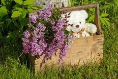 Hölzerner Kasten mit Blumen Stockfoto