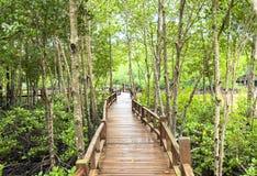 Hölzerner Korridor am Mangrovenwald Stockbild