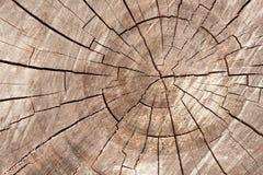 Hölzerner Kreisbeschaffenheits-Scheibenhintergrund Ringe auf einem langen Lizenzfreie Stockfotografie