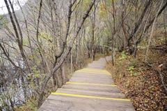 Hölzerner Pfad im Herbstwald Stockfotografie