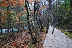 Hölzerner Pfad im Herbstwald Stockbilder