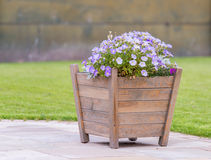 Hölzerner Pflanzer mit purpurroten Blumen Lizenzfreies Stockfoto