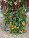 Hölzerner Pflanzer mit Spätsommerblumen Stockfotos