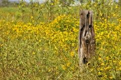 Hölzerner Pfosten und gelbe Blumen Lizenzfreie Stockbilder