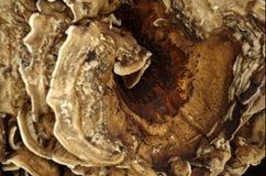 Hölzerner Pilz II Stockbild