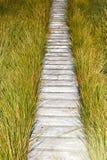 Hölzerner Plankenbrettgehweg Stockbilder