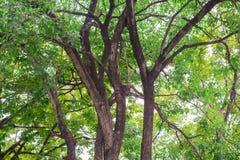 Hölzerner Sonnenlichthintergrund des Baum- des Waldesnaturgrüns stockbild