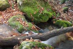 Hölzerner Stamm über moosigem Nebenfluss Stockfotografie