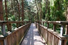 Hölzerner Steg, der hoch oben über einem Wald kreuzt Stockbilder