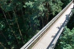 Hölzerner Steg, der hoch oben über einem Wald kreuzt Lizenzfreie Stockfotos