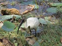 Hölzerner Storch des Wasservogels Stockfoto