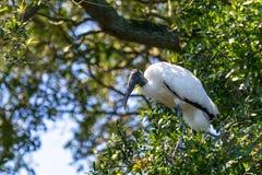 Hölzerner Storch in einem Baum Stockfotografie
