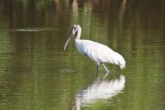 Hölzerner Storch in einem Teich Stockfoto