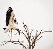 Hölzerner Storch im Baum lizenzfreie stockfotos