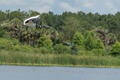 Hölzerner Storch im Flug über Wasser Lizenzfreies Stockbild