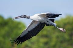 Hölzerner Storch im Flug, Florida, Staaten von Amerika stockbild