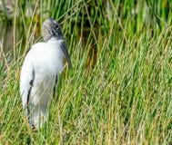 Hölzerner Storch im Gras Lizenzfreies Stockbild