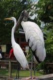 Hölzerner Storch und weißer Reiher Stockfotos