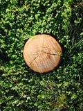 Hölzerner Stumpf auf einem grünen Kleehintergrund Lizenzfreie Stockfotos