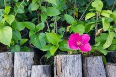Hölzerner Stumpf mit rosa Blume Stockfotos