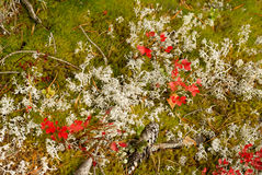 Hölzerner Teppich des Herbstes: Moos und Gras. stockbilder