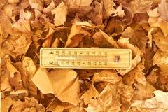 Hölzerner Thermometer in einem Hintergrund von gefallenen Blättern lizenzfreie stockbilder