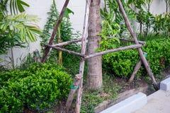 Hölzerner Unterstützungsbeitrag für Baum setzen wieder ein Lizenzfreie Stockfotos