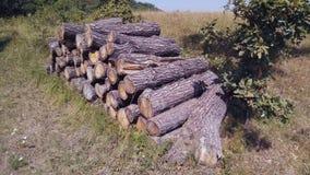 Hölzerner Vorrat im Wald Stockfotos