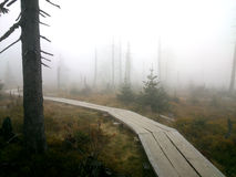 Hölzerner Waldweg im Nebel Lizenzfreie Stockfotos