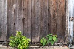 Hölzerner Wandhintergrund mit Bäumen Stockbild