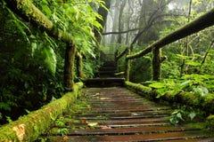 Hölzerner Weg durch die Beschaffenheit des tropischen Waldes Stockfoto