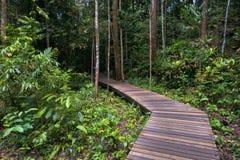 Hölzerner Weg durch Dschungel lizenzfreie stockbilder