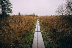 Hölzerner Weg durch Schilfe Stockbilder