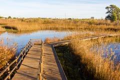 Hölzerner Weg in einem Vogelobservatorium, im Sumpfgebietnaturpark La Marjal in Pego und in Oliva stockbilder